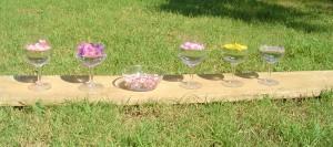 Une série d'élixirs floraux selon la méthode du Dr Bach : lavande, laurier rose millepertuis... (voir les élixir Dévas)